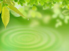 green decorative image